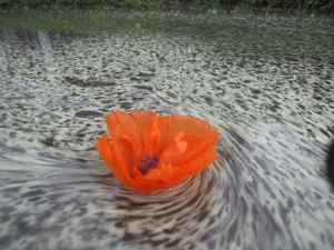 Illusion water flower 3